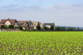 Houses Bordering Row Crops — Stockfoto