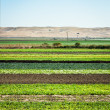 Row Crops — Stock Photo #12364267