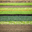 Row Crops — Stock Photo #12365183