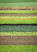 Row Crops — Stock fotografie