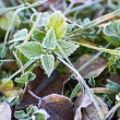 Frozen meadow — Stock Photo