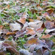Frost on meadow — Stock Photo