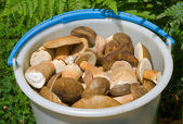 Bucket with mushrooms 12 — Stock Photo