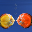 Shy fish — Stockfoto