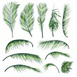 Palm Tree Leaves — Stockvector #12404585