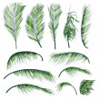 Palm Tree Leaves - Stockvektor