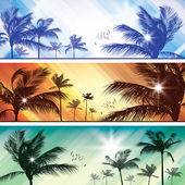 Palm tree header — Stock Vector