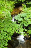 Beautiful creek — Stock Photo