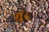 Tin on a stone beach — Stok fotoğraf