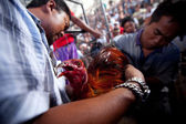 During Balinese traditional cockfighting competition — Stock Photo