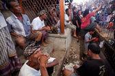Durante a competição de briga de galos balinesa tradicional — Foto Stock