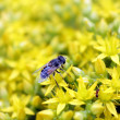 Insects on flowers — Stock Photo