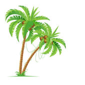 Two palm trees Illustration for design on white background