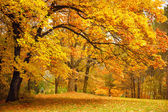 Podzim / zlaté stromy v parku