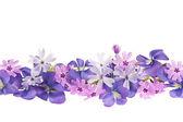Purple spring flower border