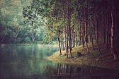 Forest background ,Vintage style
