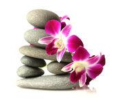 Orchideák a halmozott kövek