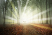 White horse in a magical forest with sun rays and fog between trees