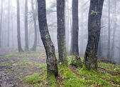 Group of trees in a forest with green grass and fog