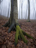 Vertical photo of tree in a misty forest