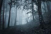 Path through a dark forest with blue light