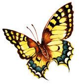 Pittura di farfalla macaone luminoso su sfondo bianco