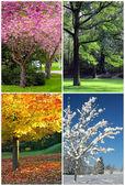 Quattro stagioni collage: primavera, estate, autunno, inverno