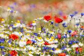 Abbondanza di fioriti fiori selvatici sul prato al tempo di primavera