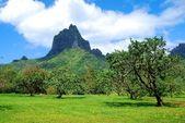 Landscape in Bora Bora
