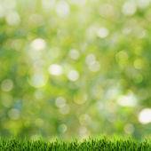 zelené trávě přes léto abstraktní pozadí s krásou bokeh