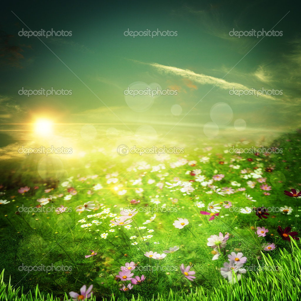 Sunrise on the meadow. Natural abstract backgrounds