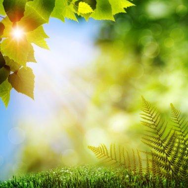 """Картина, постер, плакат, фотообои """"в лесу. естественное происхождение с папоротниковыми листьями постеры"""", артикул 12036402"""