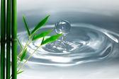 kapičky vody a bambusu. přirozené pozadí