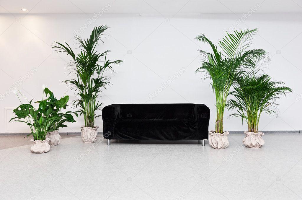 Moderne Grünpflanzen schwarz sofa im modernen minimalismus innenraum mit grünpflanzen