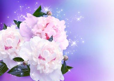 Peonies blossom