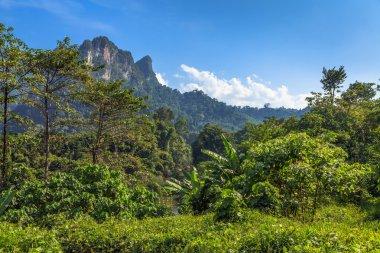 """Картина, постер, плакат, фотообои """"тропический ландшафт с тропическими лесами """", артикул 11827414"""