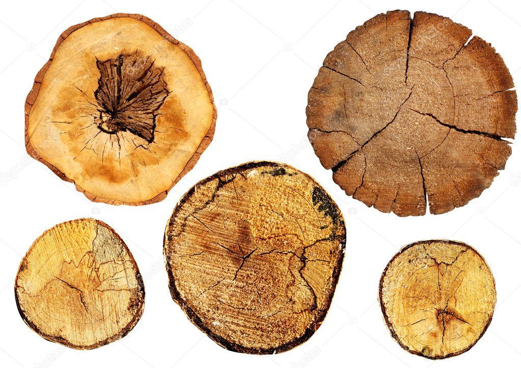Cut of a log
