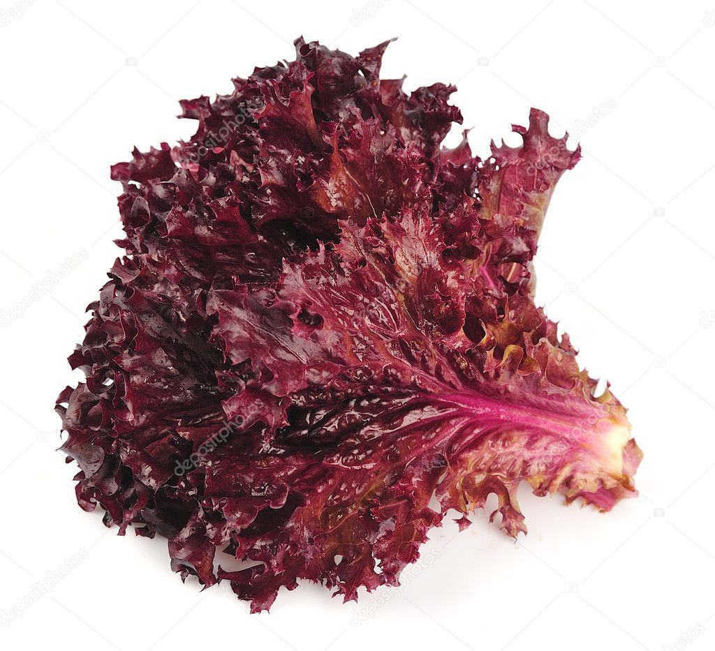 Fresh red lettuce