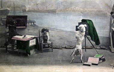 Dog's photography