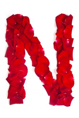 Letter N made from red petals rose on white
