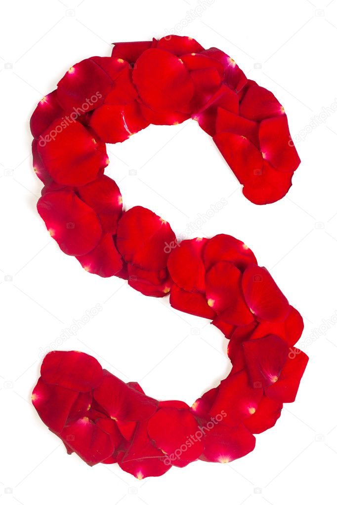 Letter S made from red petals rose on white