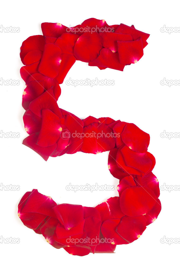 Number 5 made from red petals rose on white