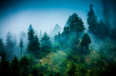 Fog in the morning forest stock vector