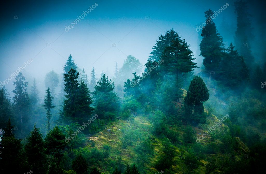 Фотообои Fog in the morning forest