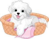 White fluffy dog