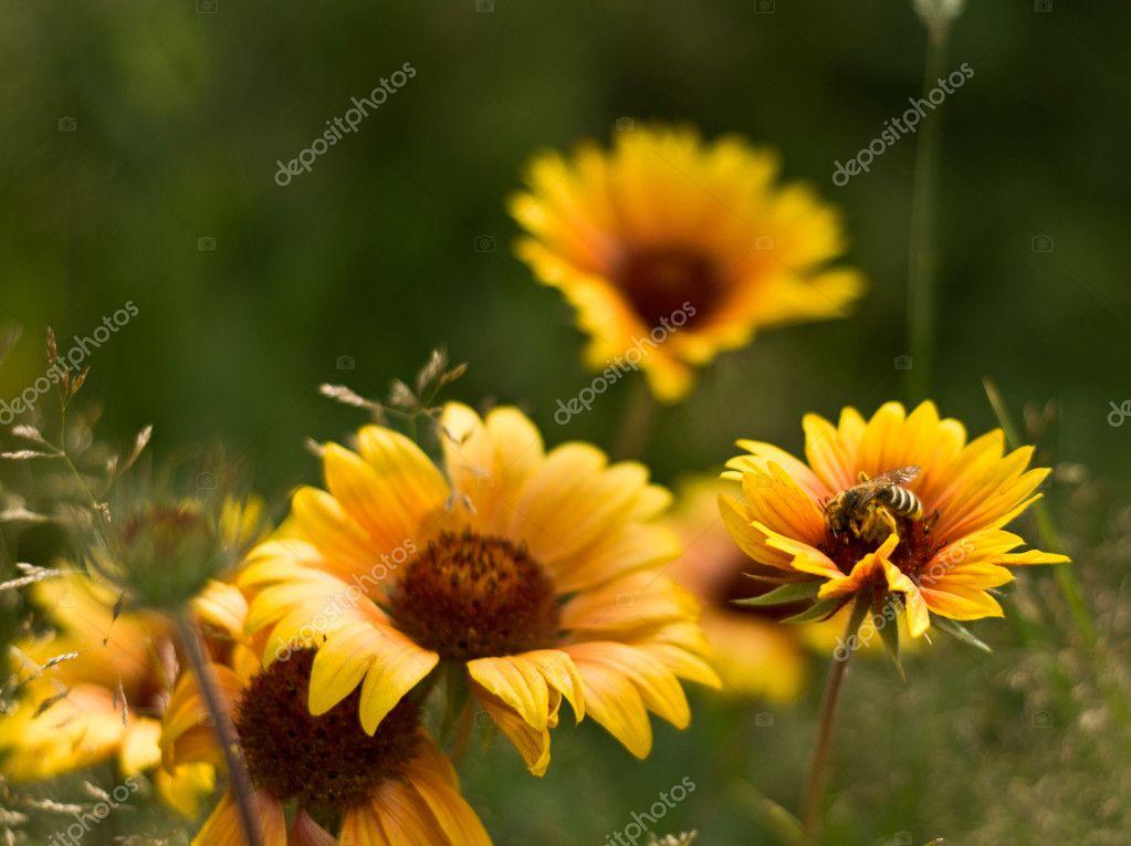 Sfondo Fiori Estivi Foto Stock Nataly0288dp 11380423