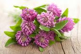 fiore di trifoglio rosa