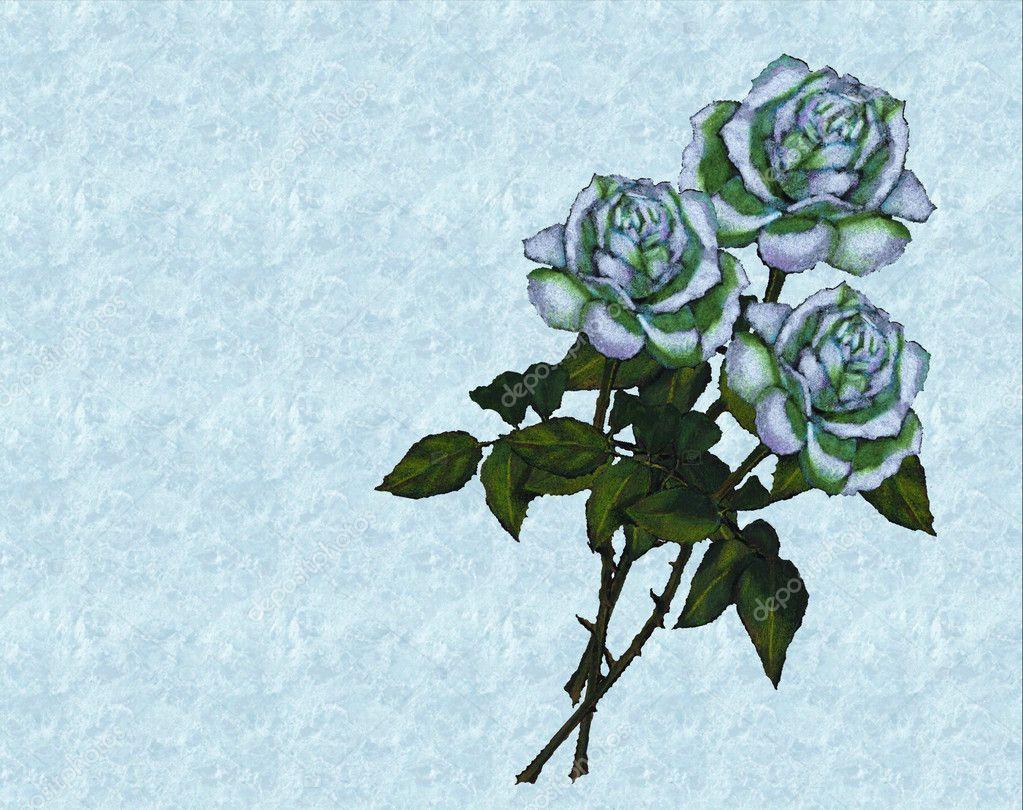 Dibujos Rosas Bonitas Rosas Blancas Sobre Fondo Azul Del Mar