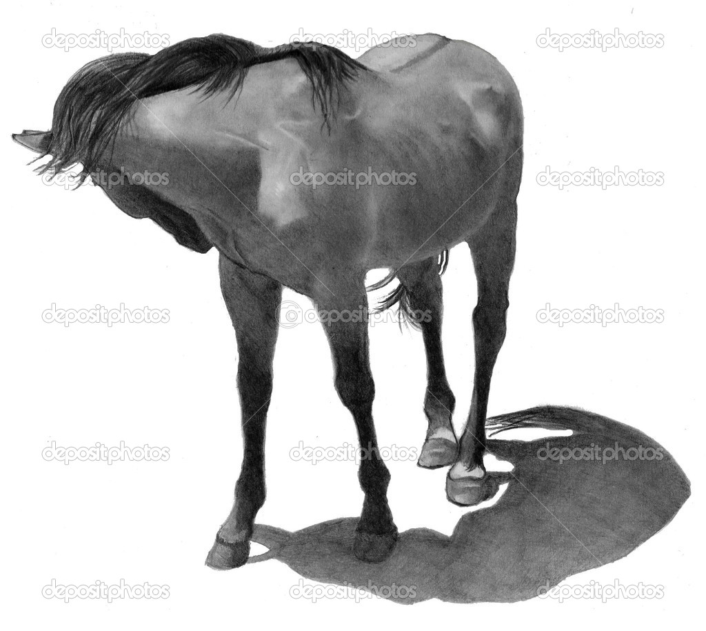 ᐈ Horse In Pencil Stock Pictures Royalty Free Horse Head Drawing Images Download On Depositphotos