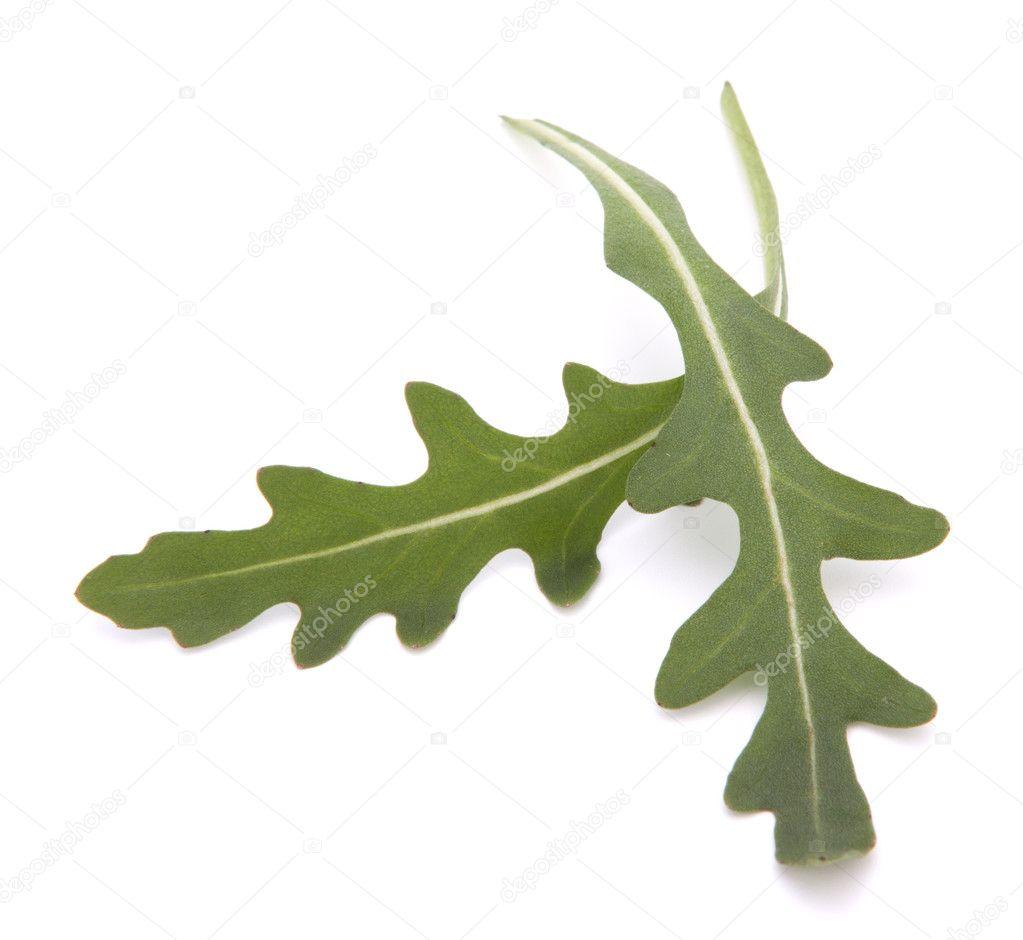 Sweet Rucola Salad Or Rocket Lettuce Leaves Stock Photo 11202769